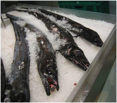 Madeiralla kannattaa maistaa tuoretta espadaa eli mustahuotrakalaa